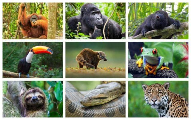 Rainforest-animals