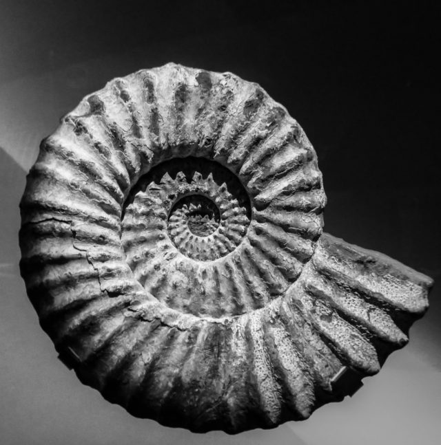 Fossil-1013x1024